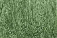 Field Grass Medium Green